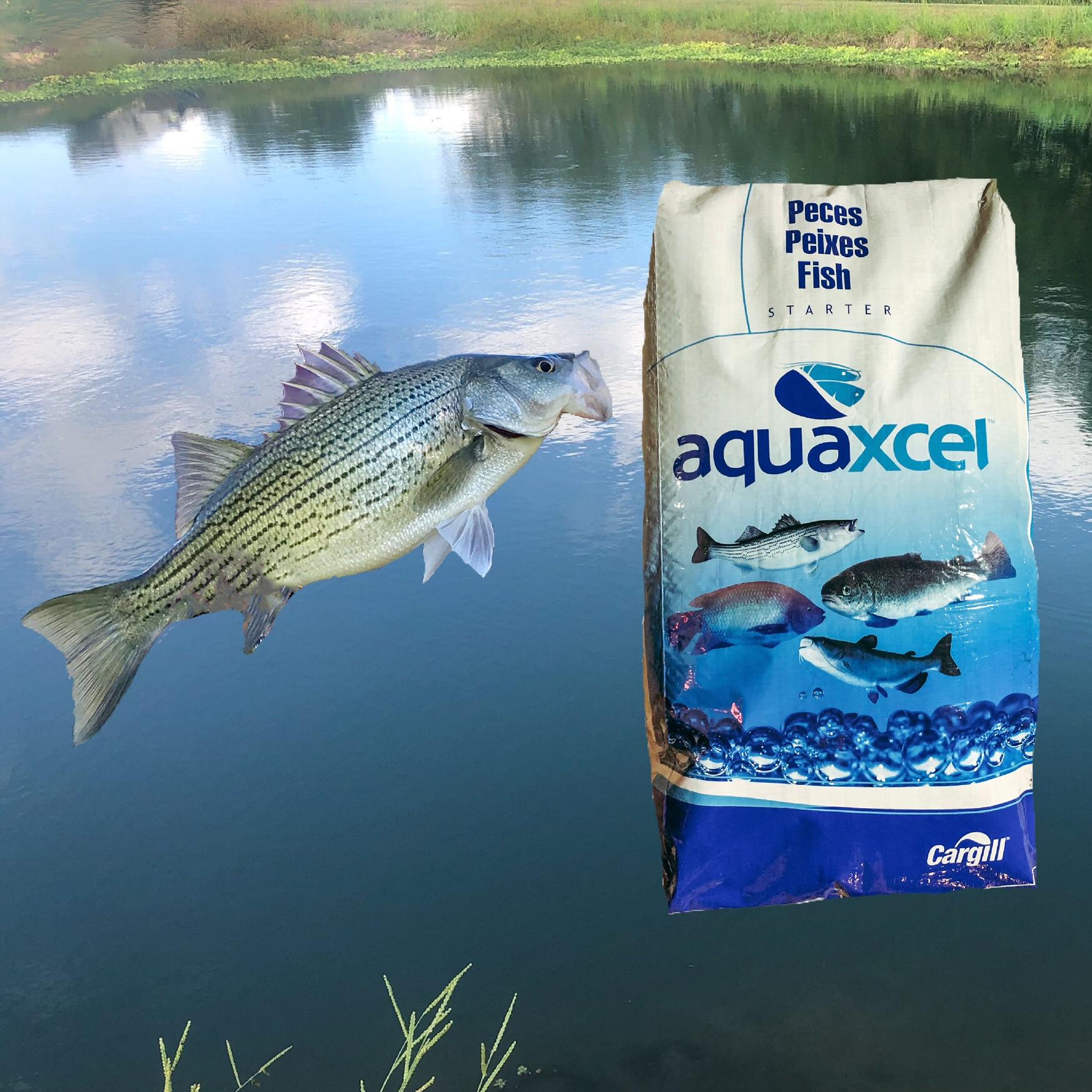 sportfish starter package